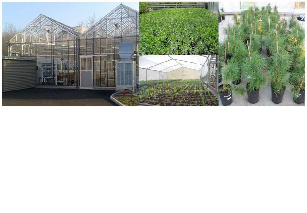 Suitable tools for acclimatization, growth and analysis of vitroplants in controlled conditions