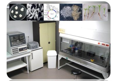 Lab equipments dedicated to genetic transformation
