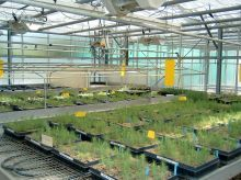 Inside the XYLOBIOTECH greenhouse (standard condition zone)